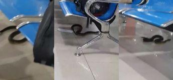 Philippines : un serpent fait paniquer les passagers dans un aéroport
