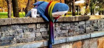 Découvrez la triste vie du requin, qui n'a désormais plus d'amis