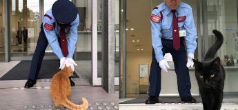 Deux chats montent la garde  devant un musée depuis plus de 2 ans