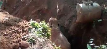 Cet éléphant se tourne et salue les hommes qui lui ont sauvé son bébé, avant de partir !