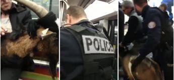 Un déséquilibré fait entrer une chèvre dans la ligne 1 du métro parisien (vidéo)