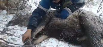 Cette vidéo des hommes sauvant un cerf de la mort redonne foi à l'humanité !