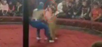 Le moment horrifiant quand un lion attaque une petite fille et la prend par le visage