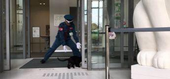 Les tentatives d'intrusion de deux chats dans un musée au Japon