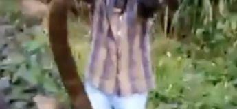 Un Indien capture ce Cobra Royal de 4,5 mètres tranquillement avec ses mains