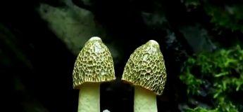 C'est beau la Nature : des champignons qui poussent en accéléré