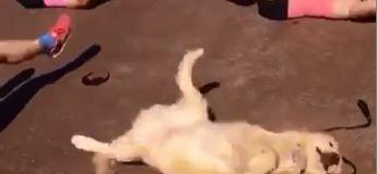 Cet adorable chien faisant du sport va vous remplir de joie