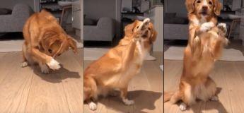 Cet adorable chien est prêt à tout faire pour avoir son morceau de brocoli !