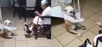 Apportez un chien à votre grand-mère, vous n'allez pas le regretter