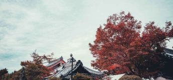 Les belles photographies de Kyoto par un talentueux photographe