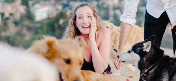 Une superbe demande en mariage avec 16 chiens
