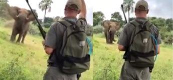 Avec seulement sa main, ce guide safari arrête un immense éléphant d'attaquer des touristes