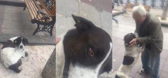 Cet homme rencontre pour la 1ère fois son chien après l'avoir perdu pendant 3 ans