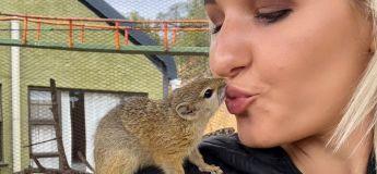 Un écureuil fait son nid dans le foyer de sa sauveuse