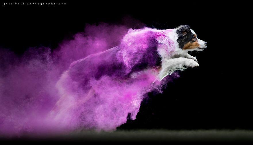 Des photographies de chiens, originales à la fois accrocheuses et artistiques