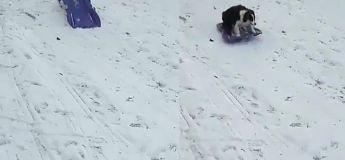 Cet adorable chien sait bien profiter de la neige