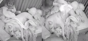 Cette petite fille essaye adorablement de couvrir son immense chien pitbull qui dort à côté d'elle