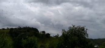 (Vidéo) Il pleut des centaines d'araignées au Brésil