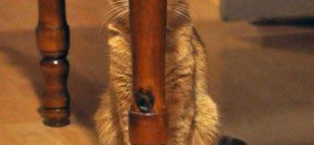Quand les chats se prennent pour des ninjas, pros de la fight et de l'invisibilité !