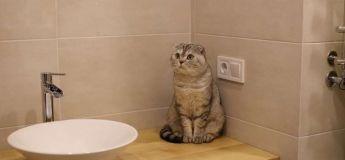 Découvrez comment ce chat ninja parvient à ouvrir la porte de la salle de bain