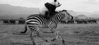 La vie secrète des animaux sans le regard de l'homme