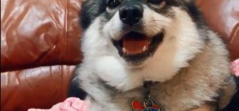 Cet adorable chien chantant est la meilleure chose que vous allez voir en ce début de semaine