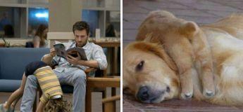 Quand une star a des similitudes avec un chien, il fait le buzz via un compte Twitter
