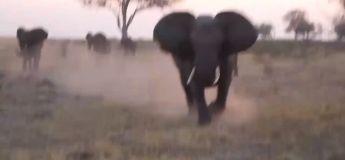 Le moment terrifiant quand un éléphant fait renverser une Jeep remplie de touristes au Botswana