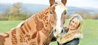 Melody Hames : l'artiste qui transforme les chevaux en œuvre d'art