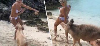 Une célèbre modèle Instagram se fait mordre les fesses par un cochon aux Bahamas