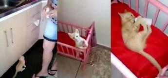 Vous n'allez pas croire ce que ce petit chat fait quand il réalise qu'il est temps pour lui d'avoir son lait