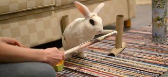Cet adorable lapin blanc réalise 20 figures en une minute et entre dans le Guinness