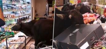 Un groupe de vaches envahissent un magasin à Hong Kong et mangent tous les légumes et fruits