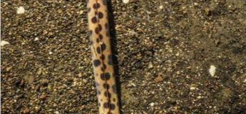 Découverte : une créature d'une forme d'un serpent a surpris les chercheurs américains