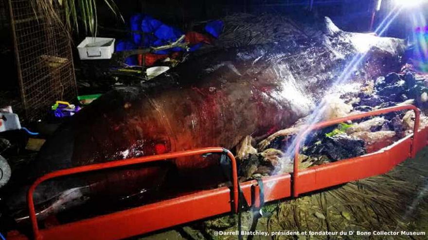 40 kg de plastique dans l'estomac d'une baleine — Horreur