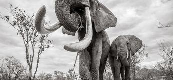 Un artiste publie les dernières photos de la légendaire « Reine des éléphants » un an après sa mort