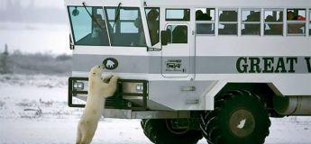 Tundra Lodge : l'hôtel mobile au cœur des ours polaires
