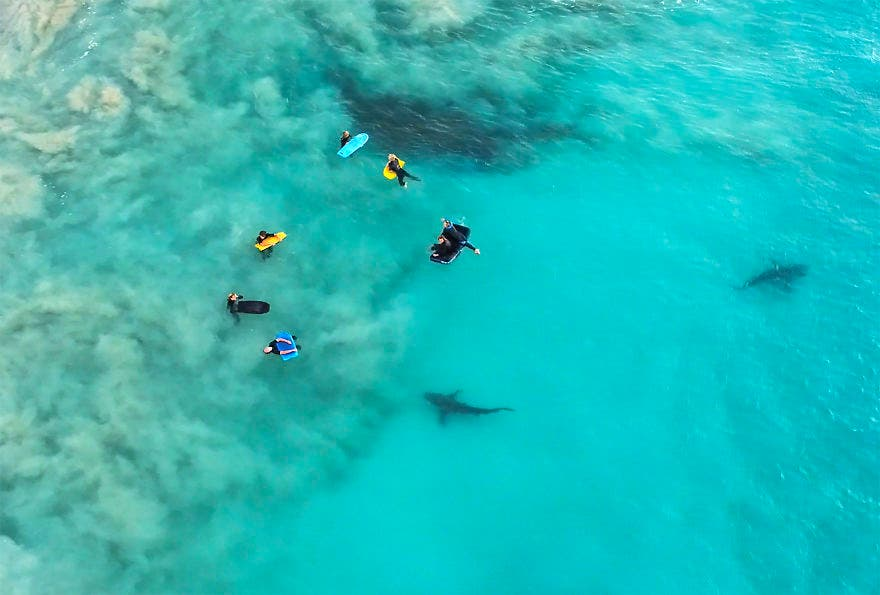 D'exceptionnelles photos de requins en pleine frénésie