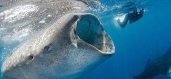 Un poisson-lune géant découvert au large de l'Australie
