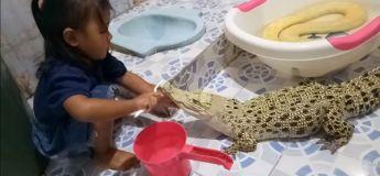 OKLM, Cette petite fille brosse les dents d'un crocodile