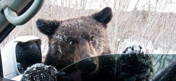 Une caméra de surveillance filme un ours en train d'ouvrir la portière d'une voiture