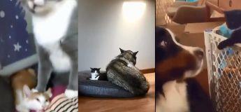 Les chats peuvent être les créatures les plus adorables mais ils sont remarquablement méchants