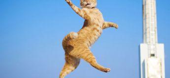Les plus drôles images de chats dansant