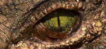 Un des plus dangereux animaux du monde avec la couleur des yeux la plus fascinante