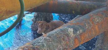 L'émouvant sauvetage d'un chien par des travailleurs sur une plateforme pétrolière