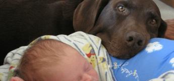 Un chien héroïque défend et sauve un bébé d'une nounou dangereuse