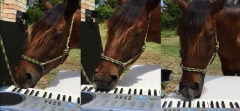 Ce cheval jouant au piano est la meilleure chose que vous allez voir