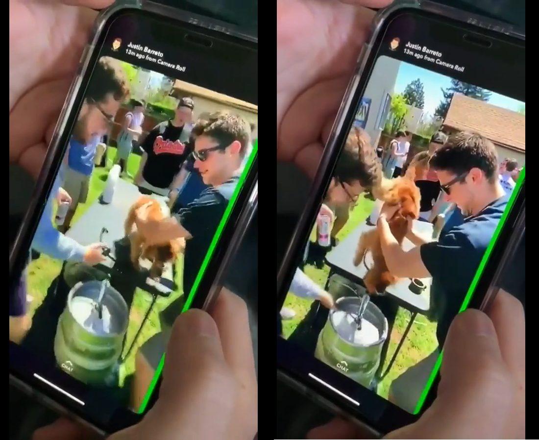 Cette horrible vidéo d'un groupe d'étudiants forçant un pauvre petit chien à boire de la bière est devenue virale