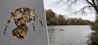 Une femme roule dans une rivière après avoir vu une araignée sur ses genoux