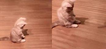Cette vidéo d'un chaton jouant avec son ombre changera votre humeur immédiatement